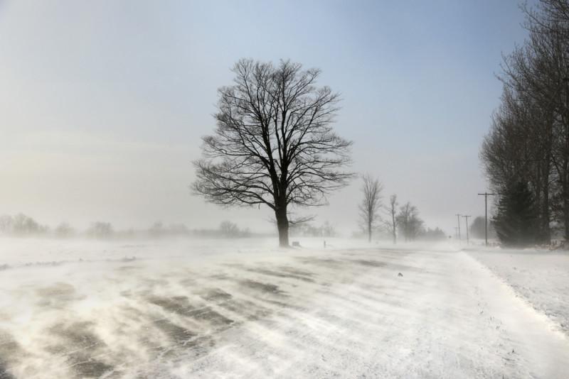 tree in the winter wind
