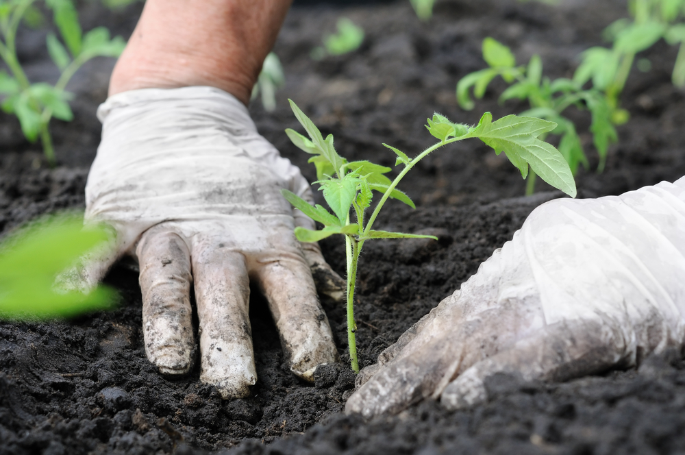 hands in the garden